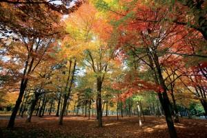 L'automne!